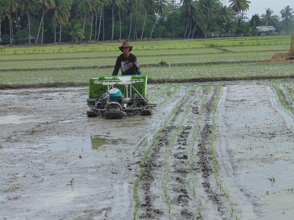 mechanical rice transplanter.2