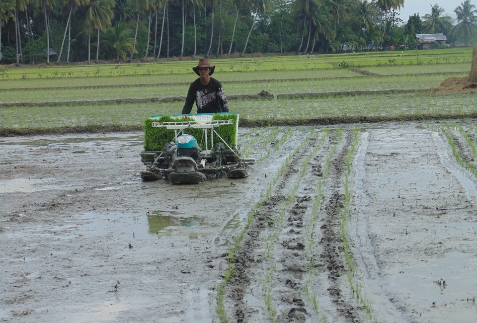 mechanical-rice-transplanter-2